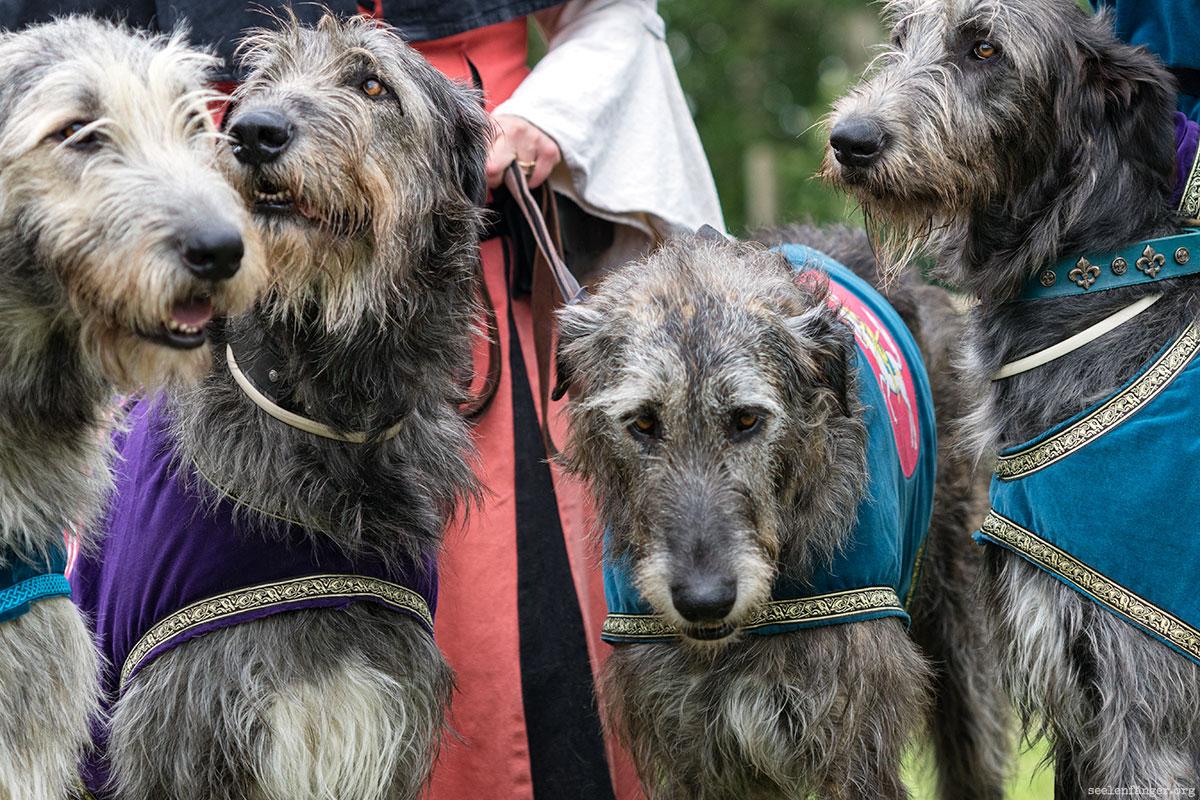 Irish-Wolfhounds auf dem 1.Schalkholzer Mittelalter Spektakel