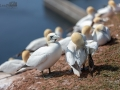 Helgolandreise 2019