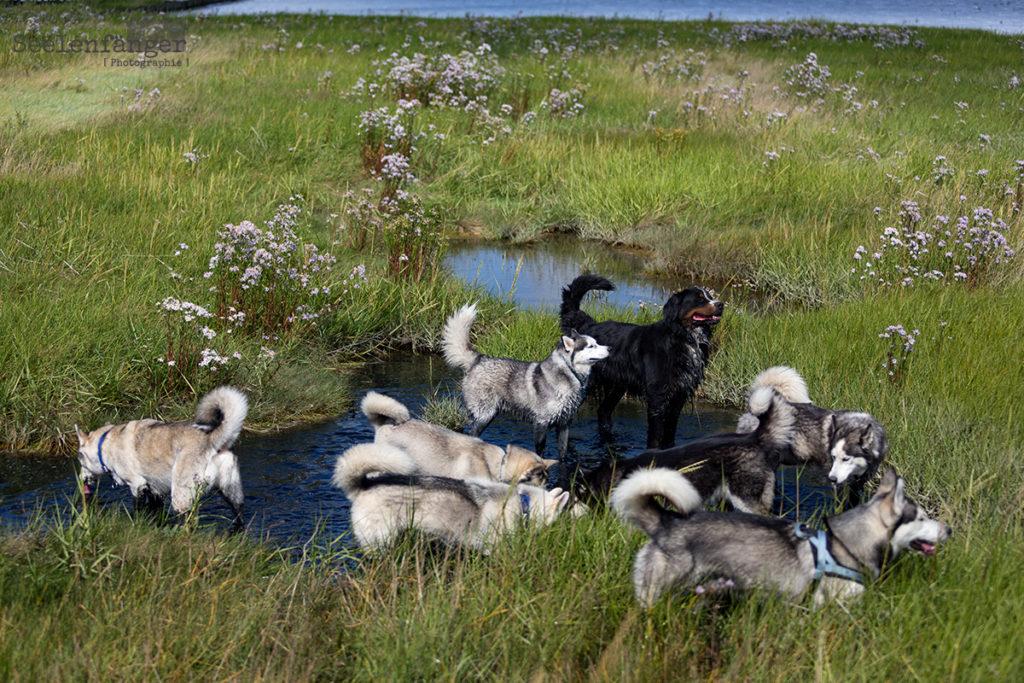 Nordseeausflug mit der Huskybande